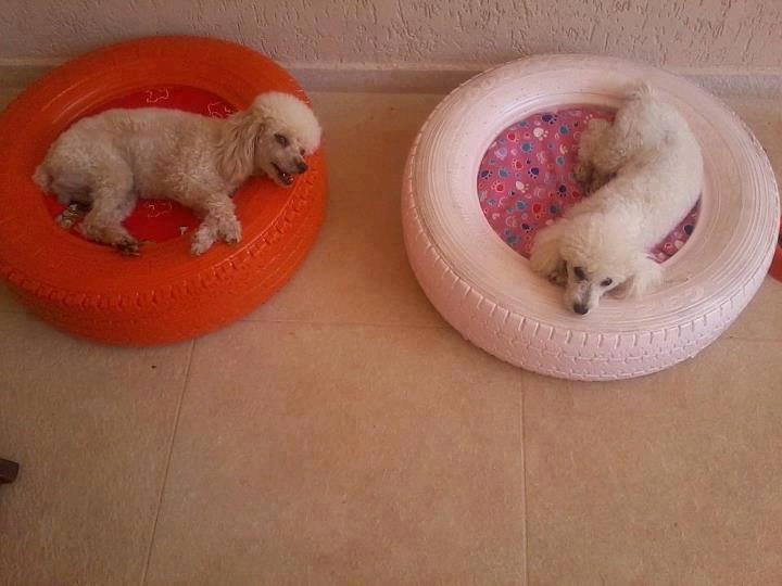 pneu-poodles