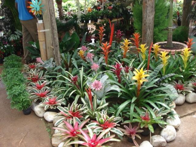 casa-da-cris-bromelia-flores