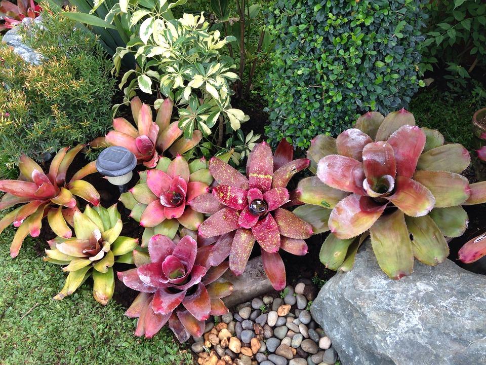 casa-da-cris-bromelia-jardins-vermelha