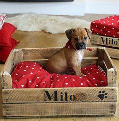 casa da cris caixote reciclado madeira cama de cachorro pets