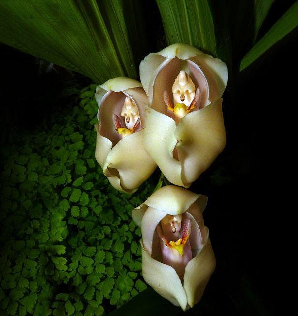 casa-da-cris-orquidea-bebezinho