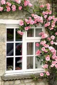 casa-da-cris-rosas-trepadeiras-na-janela