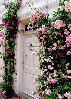 casa-da-cris-rosas-trepadeiras