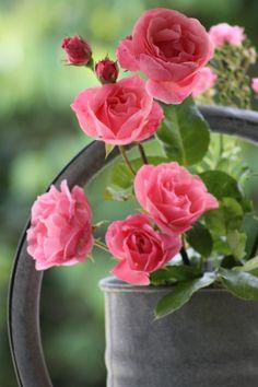 casa-da-cris-vaso-de-rosas-pink