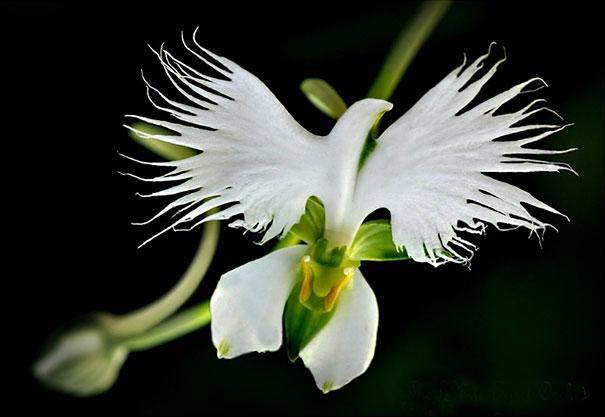 flor-garca-branca-casa-da-cris