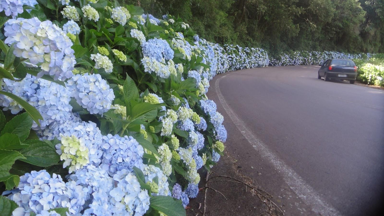 hortensia-casa-da-cris-gramado-rodovia