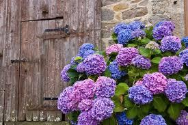 hortensia-casa-da-cris-porta