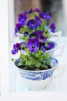 casa-da-cris-xicara-e-violetinhas