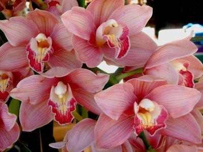 como-cultivar-orquideas-em-casa-7