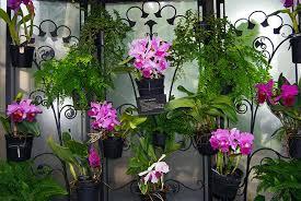 casa-da-cris-orquideas-jardim-vertical