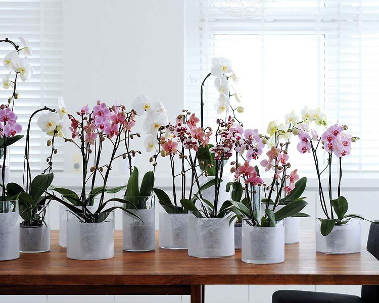 casa-da-cris-orquideas-lindas