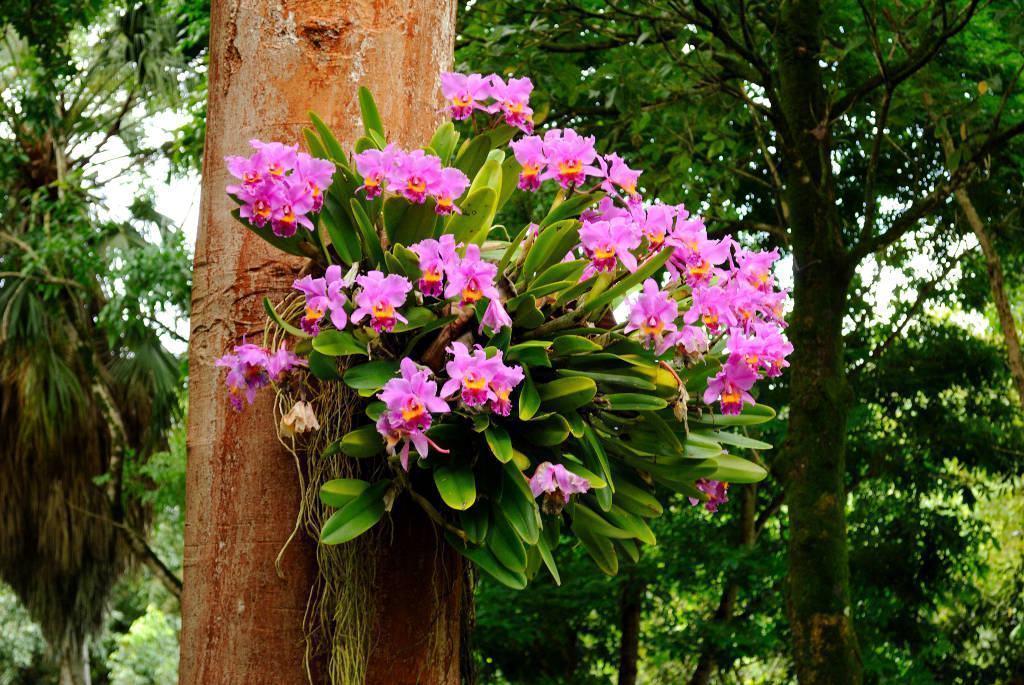 casa-da-cris-orquideas-tronco