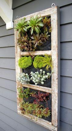 casa-da-cris-reciclagem-de-janela-plantas