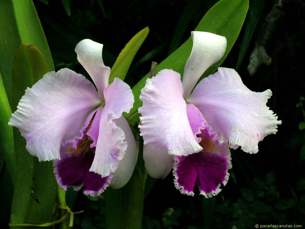 como-adubar-as-orquideas-1