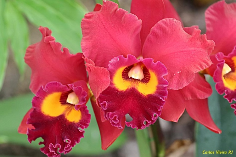 orquideas-f57b9b